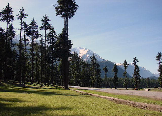 Beautiful view of forest in Kalam swat Pakistan.