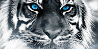 Los principios del tigre, Francisco Acuyo, Ancile