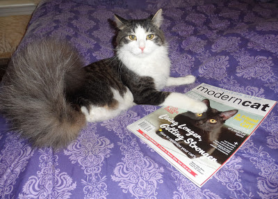 Anakin with Modern Cat Magazine featuring Little Bear