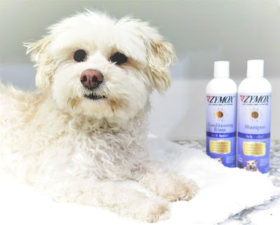 Zymox itch relief pet shampoo and conditioning rinse for dogs and cats.  Soothes pets itchy skin. Natural itchy skin relief for dogs, cats.  Pet skin condition, Pet allergies, Allergies in dogs, itchy skin patches in pets
