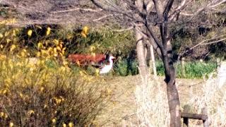 せせらぎの園とシラサギ