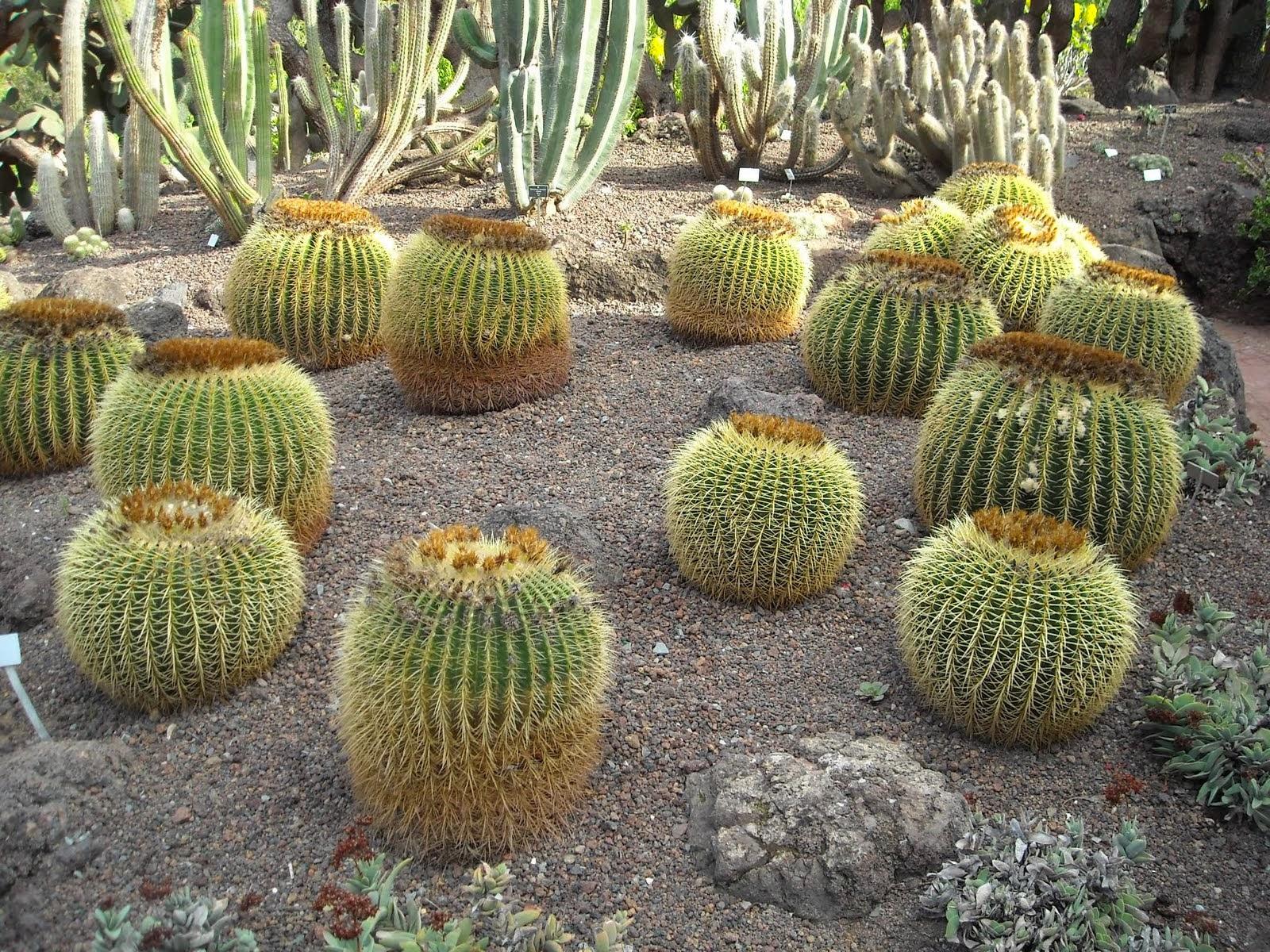 giardino subtropicale