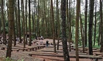 Jalan Menuju Hutan Pinus Mangunan Bantul