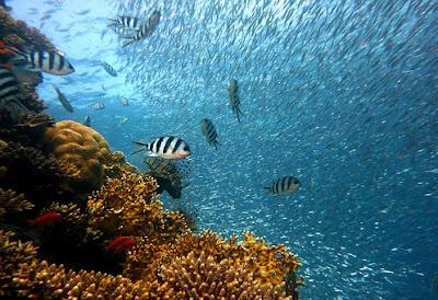 Cara Ikan Berkomunikasi Satu Sama Lain