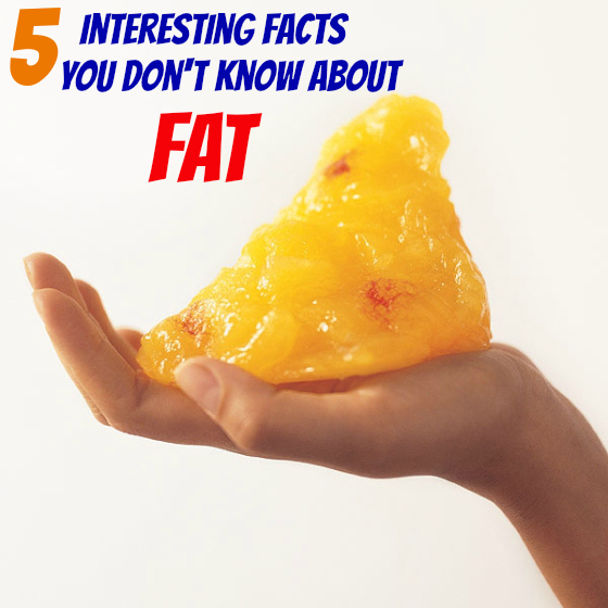 Fact About Fat 96