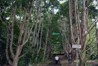 Hutan Desa Manjau
