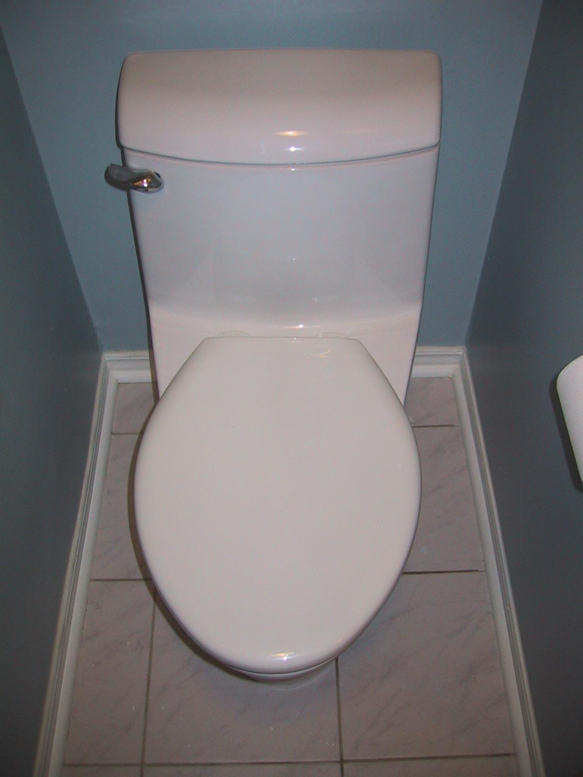 Iggy In Ireland   Little     Toilet    Shock