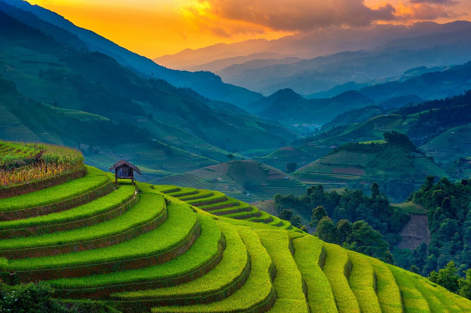 Banco De Imágenes Agricultura En Vietnam Cultivo De Arroz