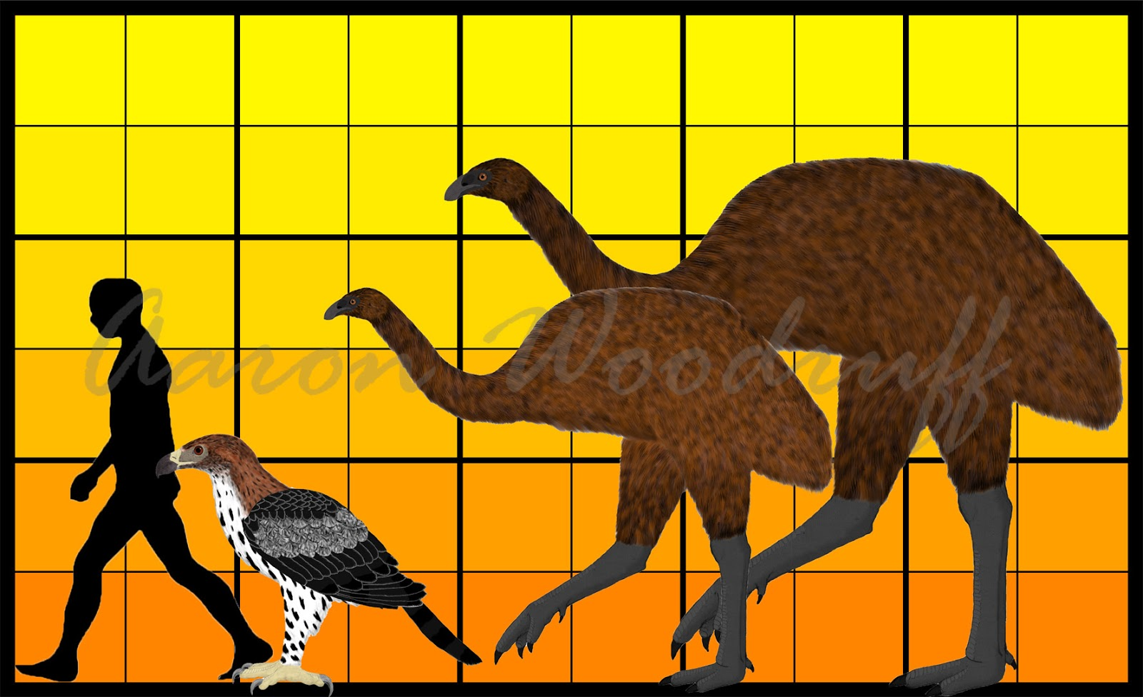 Life in the Cenozoic Era: South Island Giant Moa (Dinornis ...