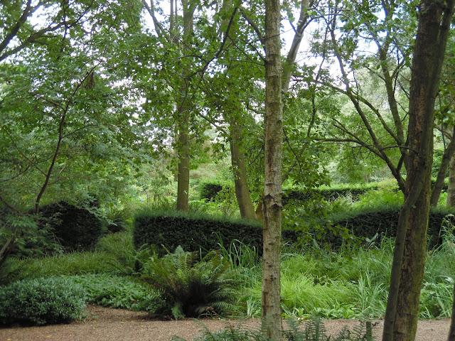 żywopłot z cisa, ogród leśny, cienisty