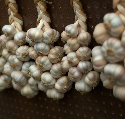 Garlic bulbs drying