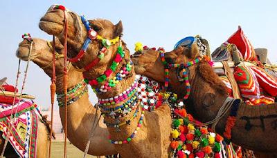develer ne için kullanılır