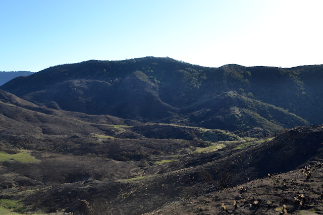 spared hillside