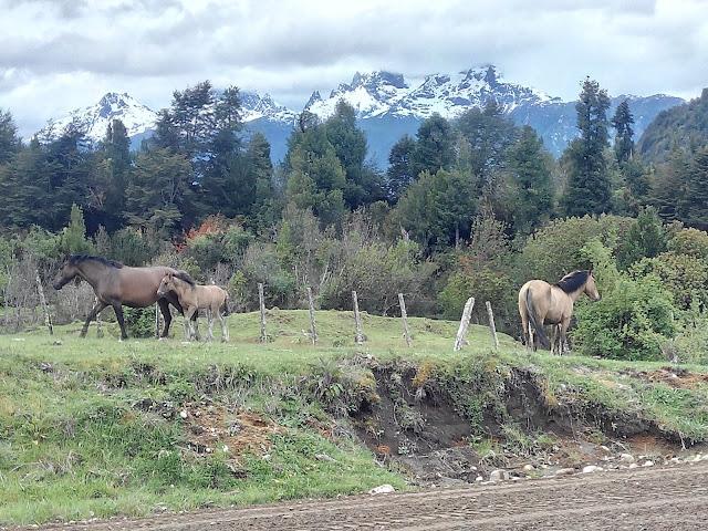 Cerro Barros Arana, Chile