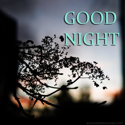 Best Good Night Images, Photos and Pictures for Free Download