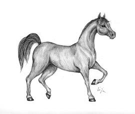 Il mio cavallo monta inglese ed americana for Disegni di cavalli a matita