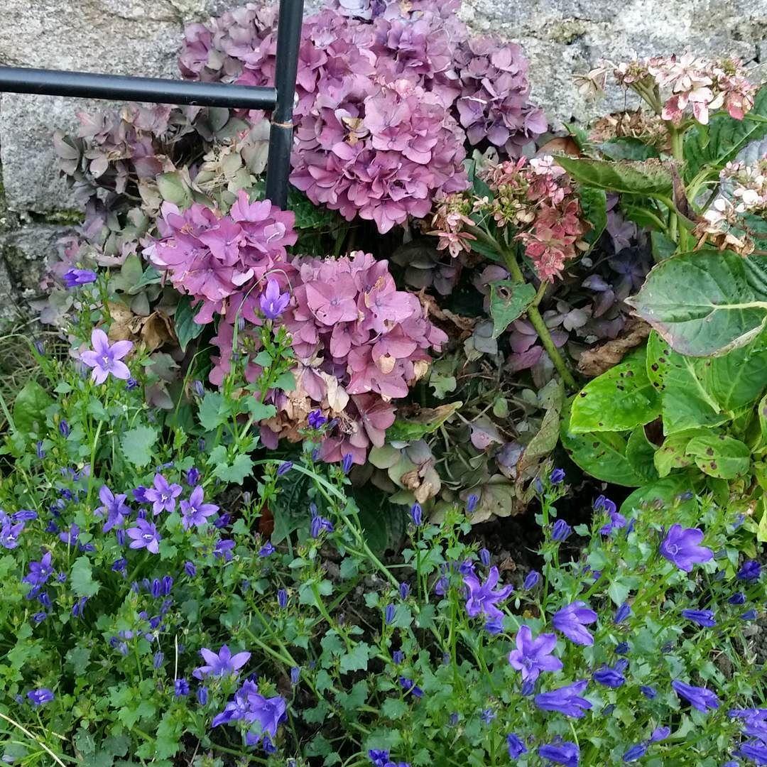 Calendula and hydrangea