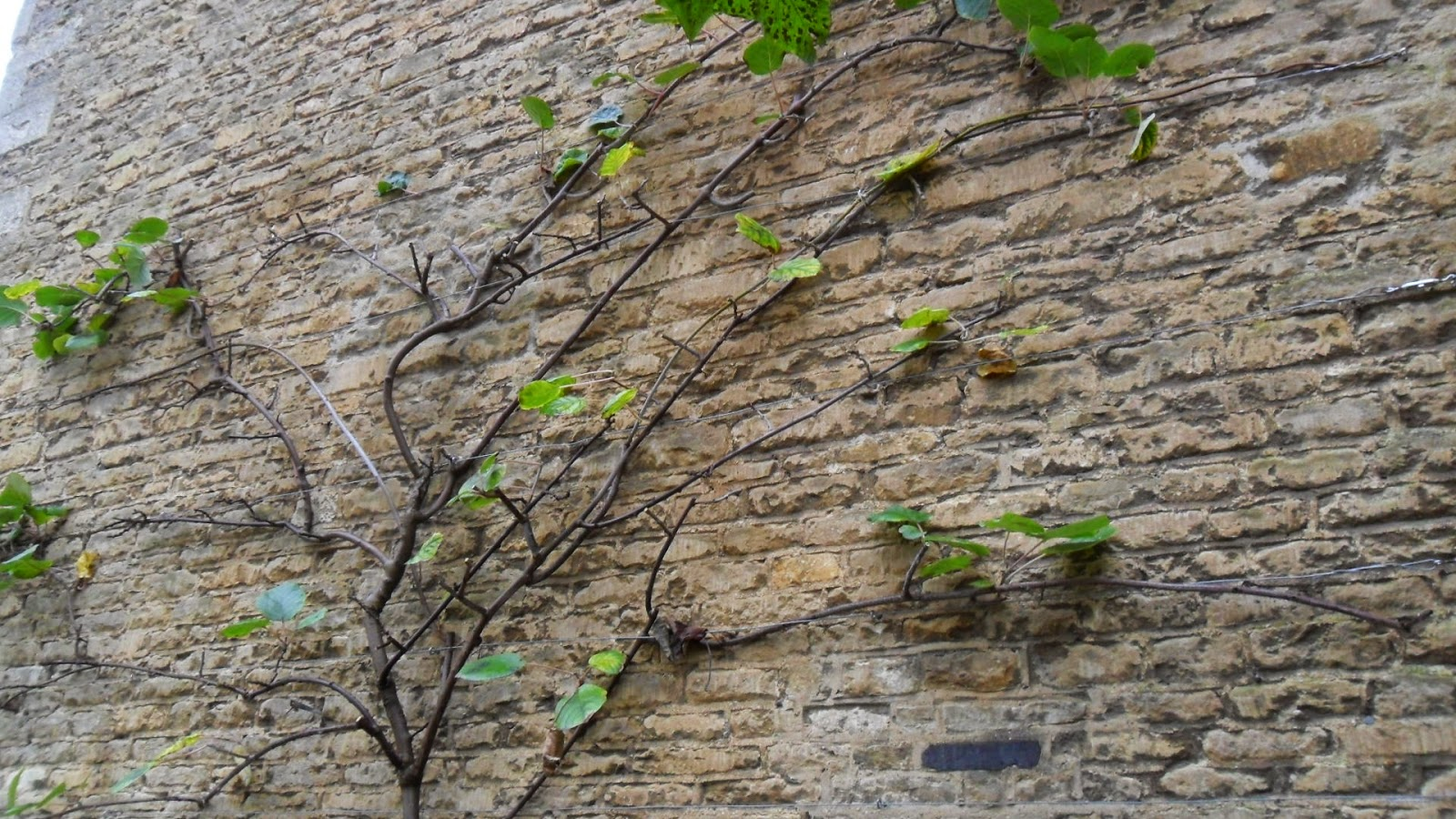 Worcester College Gardeners 2009-2018: The Pruning Of The