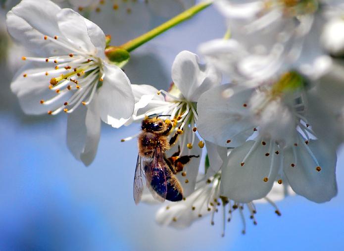 insektenhotel f r wildbienen im garten. Black Bedroom Furniture Sets. Home Design Ideas