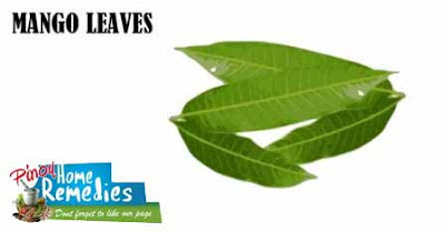 Home Remedies for Diabetes: Mango Leaves