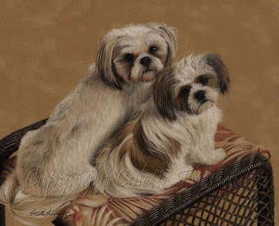 Pet Portrait of Shih Tzu in Pastel by Canadian Animal Artist Colette Theriault