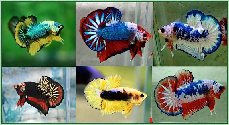 Image The New Angle On Fighter Fish Food Just Released