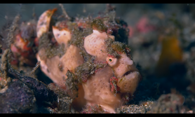 Do You Know About Frog Fish