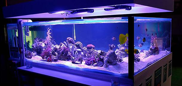 Aquarium lighting for Blue light for fish tank