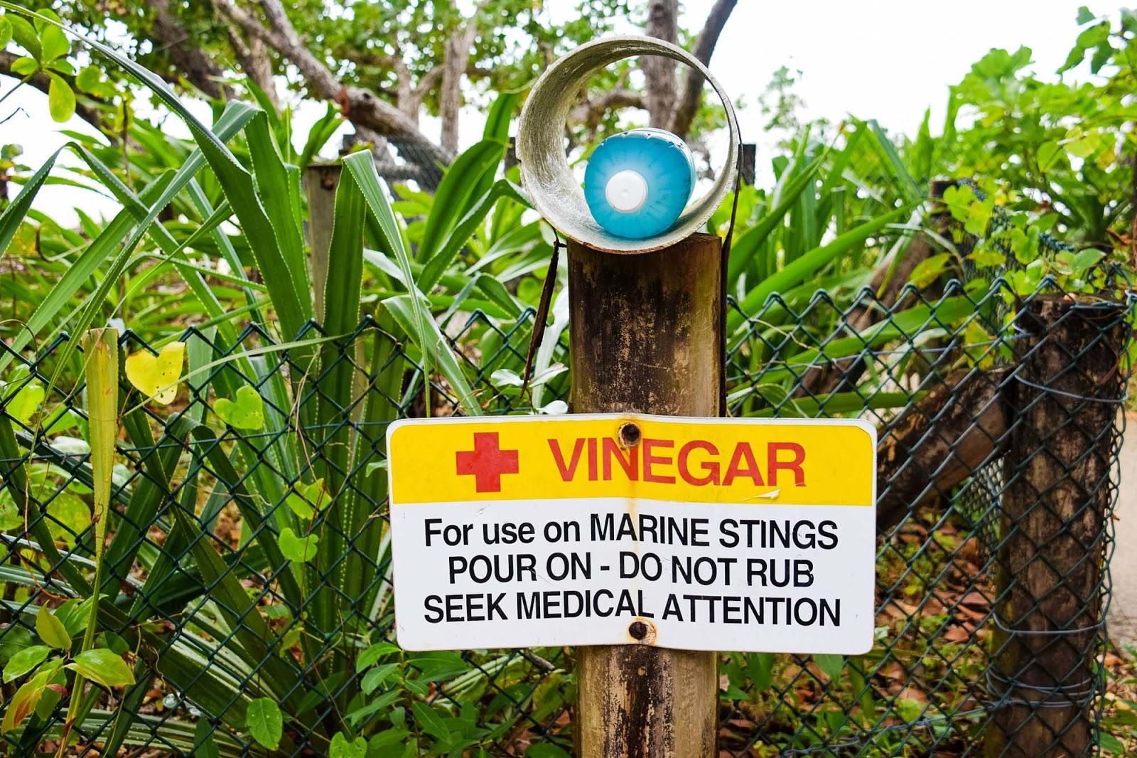 beach vinegar for marine stings