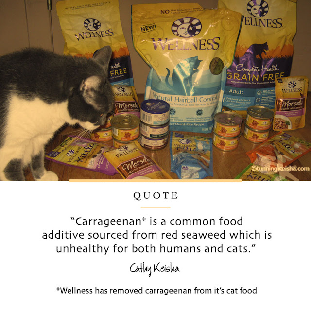 Why Carrageenan is Bad For Your Cat  #HealthyMeetsHappy #sponsored