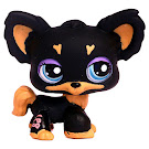 Littlest Pet Shop Multi Pack Chihuahua (#1571) Pet