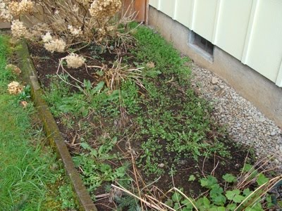 Step 2 Trim Shrubs And Perennials Then Pull Weeds
