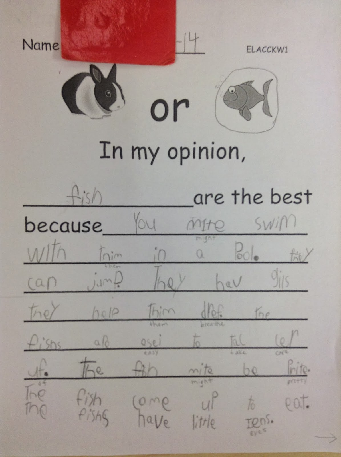 Writing An Opinion Paper For Kids