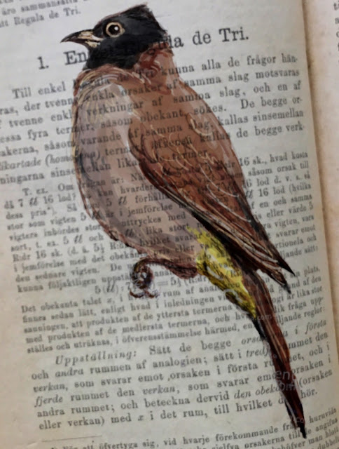Bulbul on old math book by Ulf Artmagenta