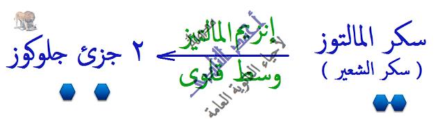 الإنزيمات - متخصصة -  لها تأثير عكسى - المالتوز -  مدونة أحمد النادى- أحياء الثانوية العامة