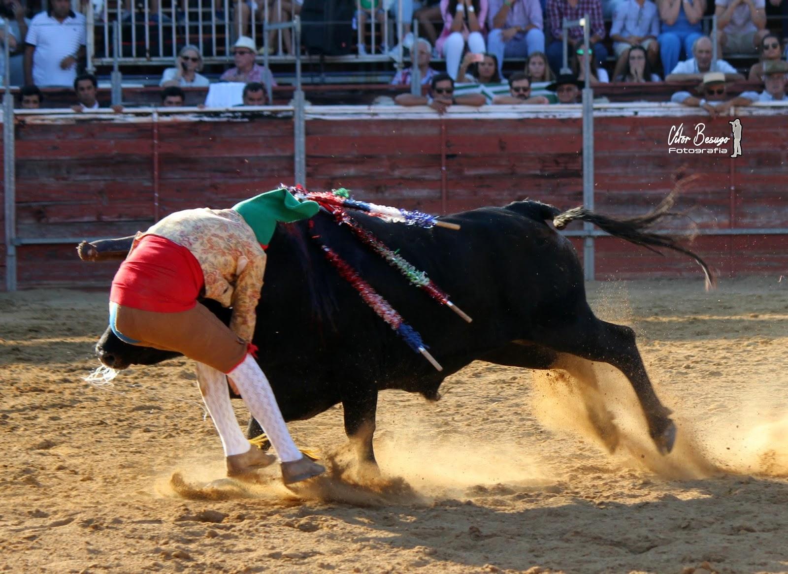 Morre forcado colhido por um touro