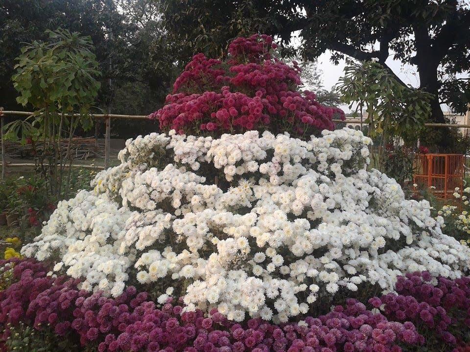 mix flowers wallpaper