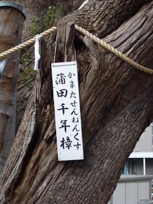 蒲田神社蒲田千年樟