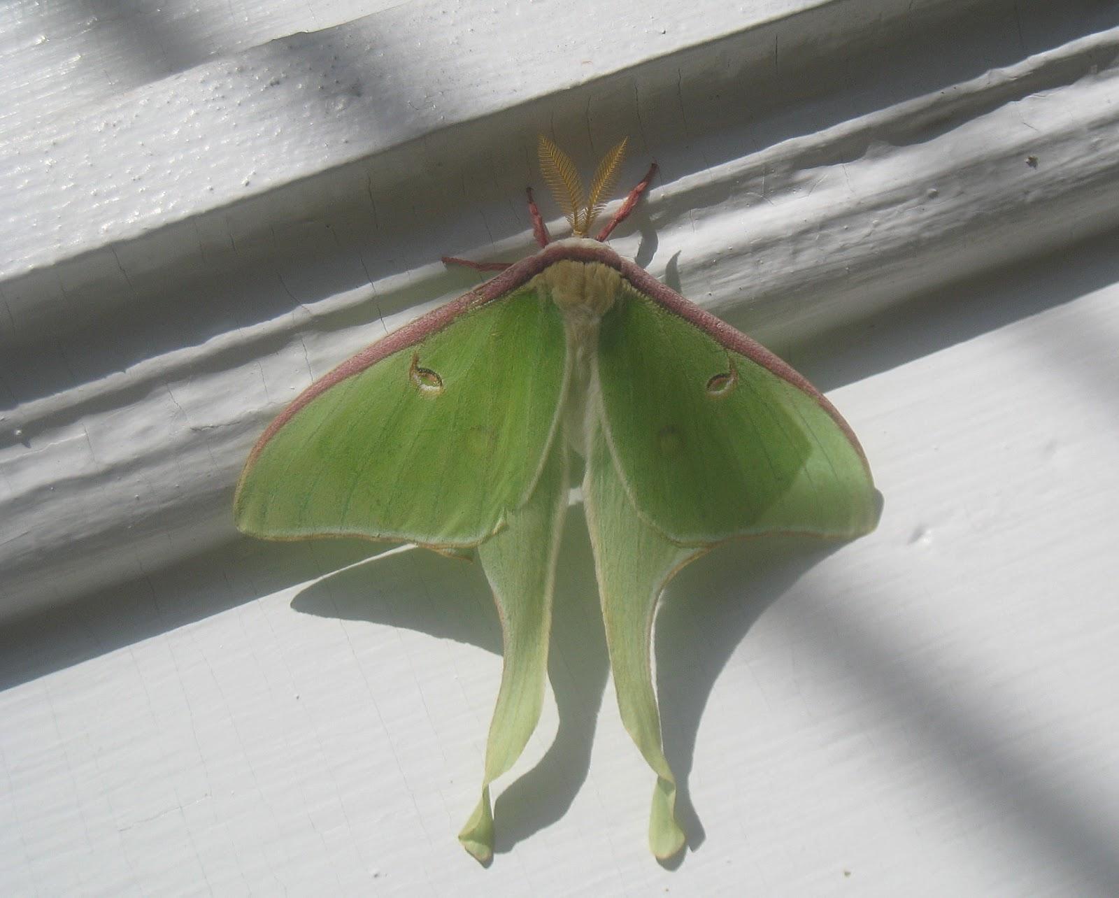 Moths In Bedroom At Night Functionalities Net
