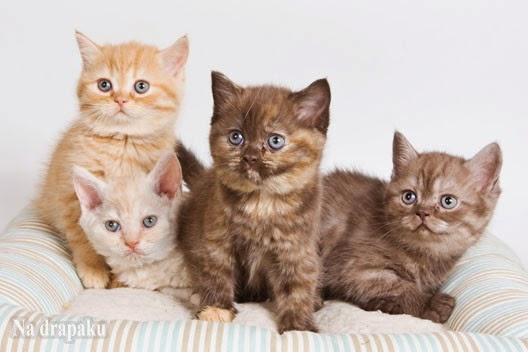 Koty na Allegro