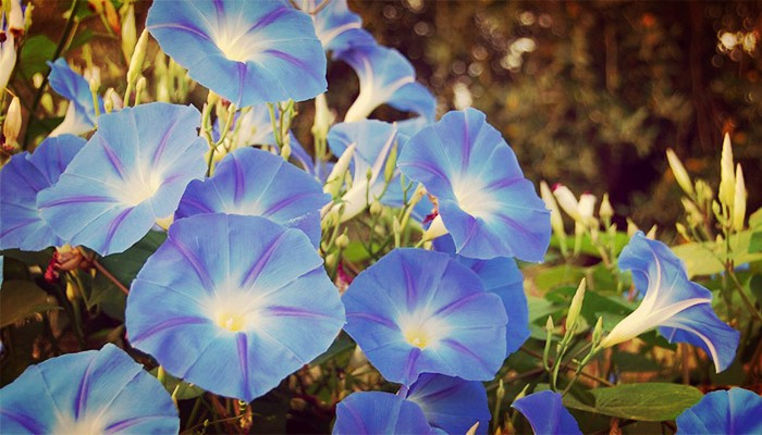 Jardin y cerco ornamental