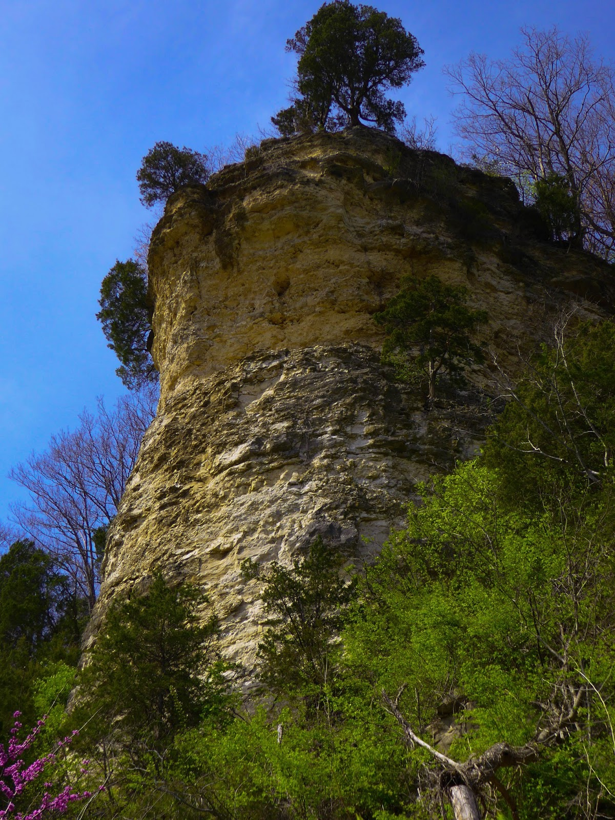 Limestone Bluff