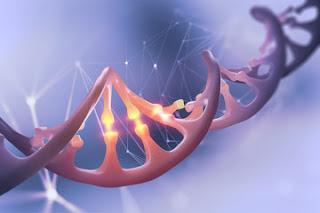 Rekayasa Genetik Pada Hewan - Manusia dan  Etikanya
