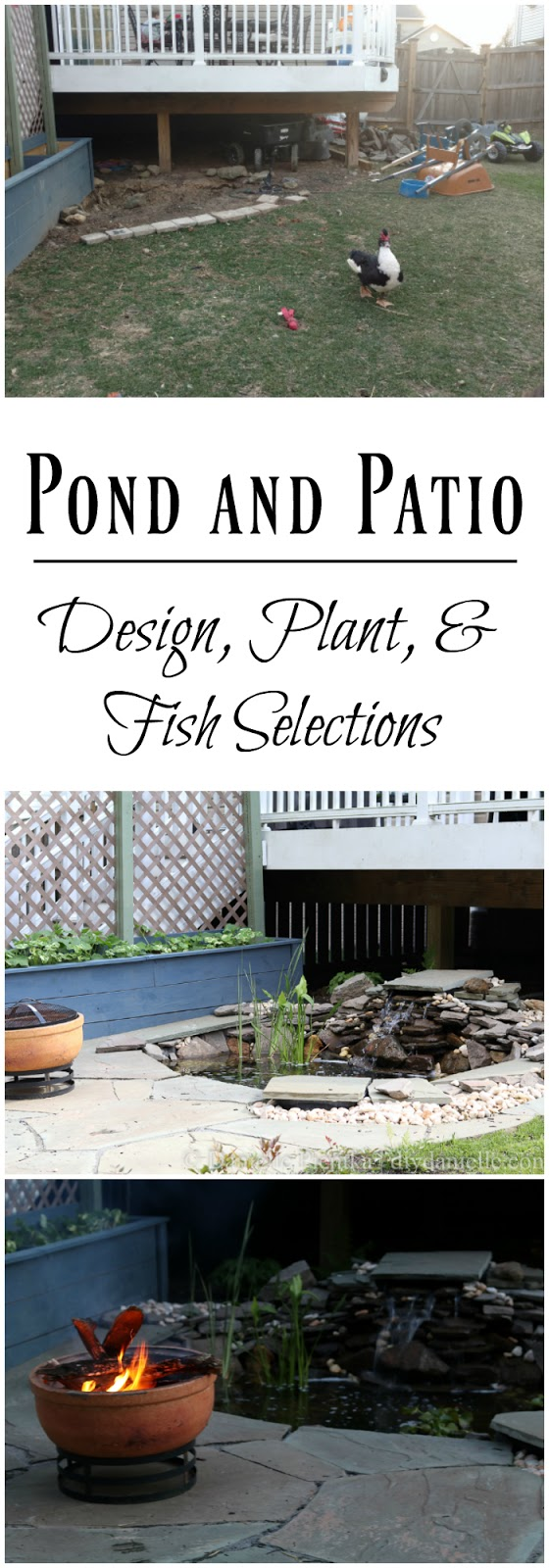 Gorgeous backyard pond setup with plant and fish choices explained.