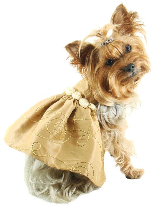 Dog Abc: Dog Fashion Accessories
