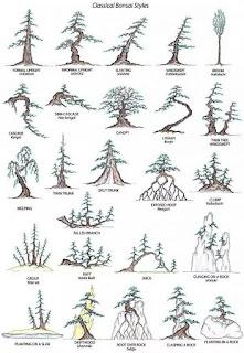 Berbagai gaya bonsai klasik