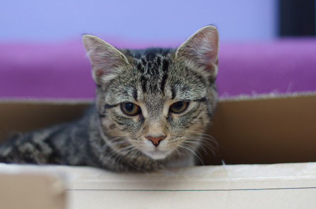 Useful resources on dogs, cats & science illustrated by a cat poking its head out of a box