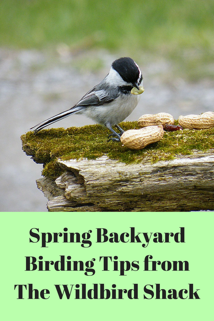 A little time and a keyboard spring backyard birding tips for Mel s fish shack
