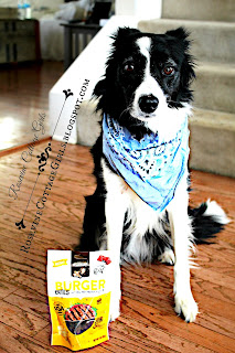 Border Collie with Nutrish Dog Treats