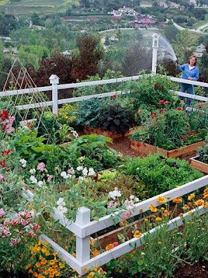 Veggie Gardens - Pinterest Gardening